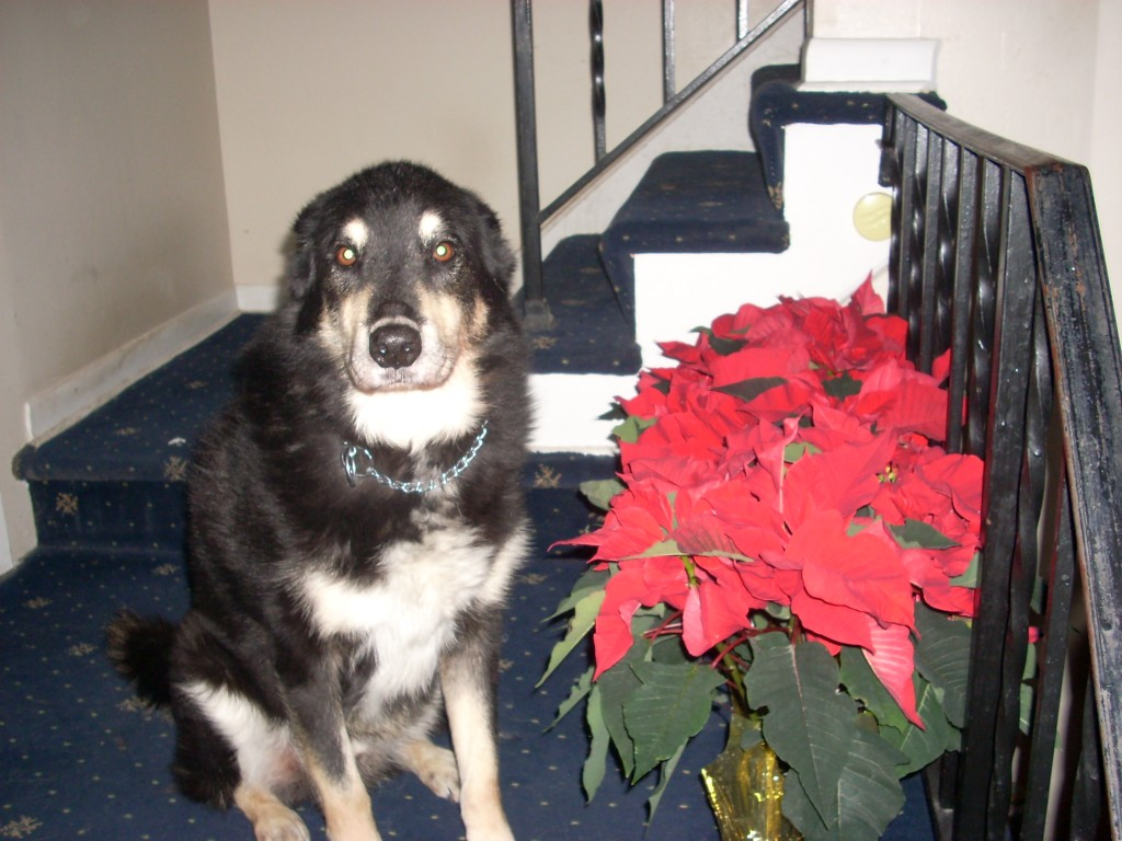 Holiday Greetings Dog