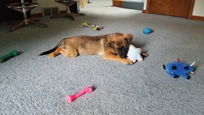 Puppy surrounded by chew toys and stuffies