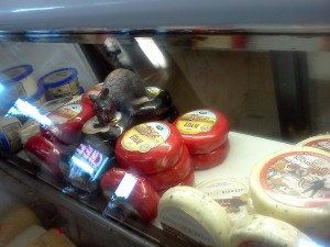 Cheese Behind the Counter