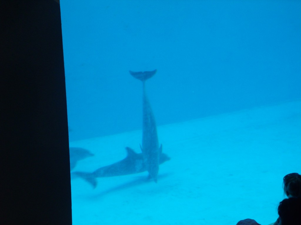 Dolphin pictures