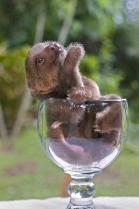 Cute baby sloth in a glass