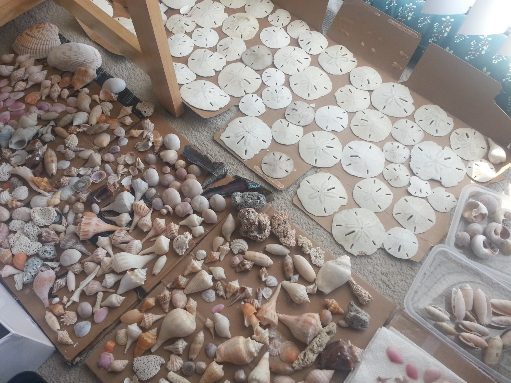 This is some of my seashell collection from this year. I'm leaving them out to dry in the sunlight from our balcony door.