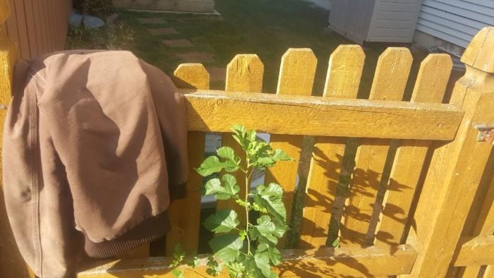 homeless man's coat in my backyard