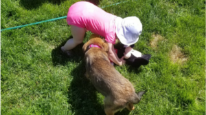 toddler and puppy playing in the grass